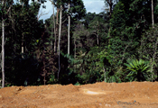 Pazir Jungle, 1993